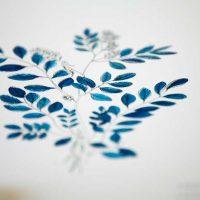 illustration botanique indigo vegetal teinture